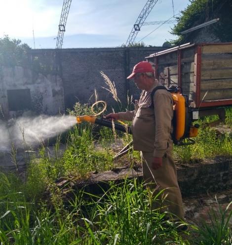 El Municipio intensifica acciones contra el dengue