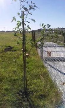 Plantación de árboles en el hogar de animales
