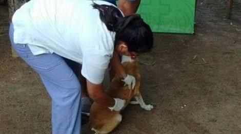 Vacunarán a perros y gatos en el desfile de mascotas