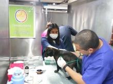 Exitoso operativo de mascotas en el camping