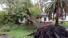 Rápida respuesta de la Municipalidad ante un árbol caído en una vivienda