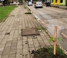 """Continúa el programa municipal """"Un vecino, un árbol"""""""